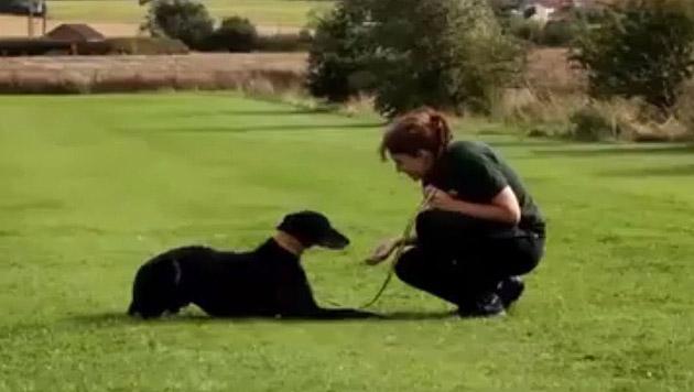 """Von 17.000 möglichen neuen Besitzern wollte niemand Hund """"Jed"""" adoptieren... (Bild: Screenshot YouTube.com)"""