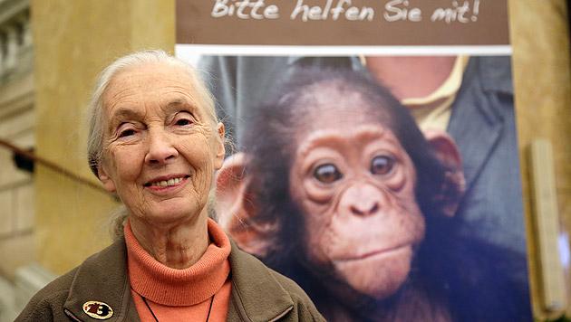 Forscherin Jane Goodall rührte ihr Wiener Publikum (Bild: Klemens Groh)