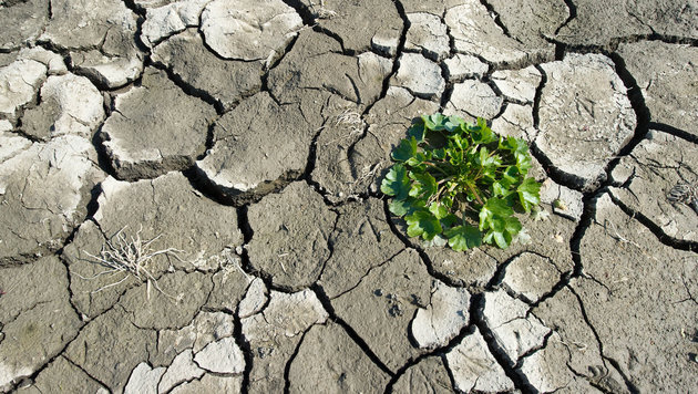 Schwerste Winter-Dürre seit 50 Jahren auf Malta (Bild: APA/dpa/Patrick Pleul)