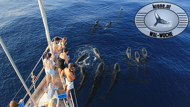 Tierfreunde gemeinsam mit dem Tethys-Institut auf der Spur der Wale und Delfine. (Bild: A. Costanzo, Tethys)