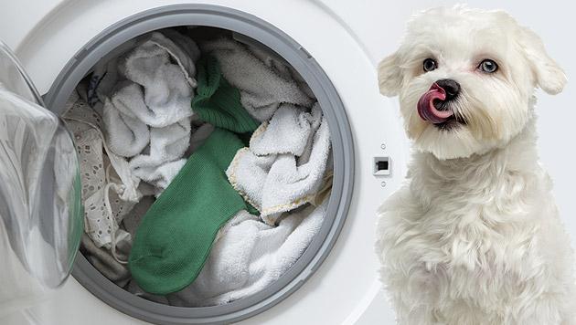 Gequälter Hund in Waschmaschine sorgt für Empörung (Bild: thinkstockphotos.de (Symboldbild))