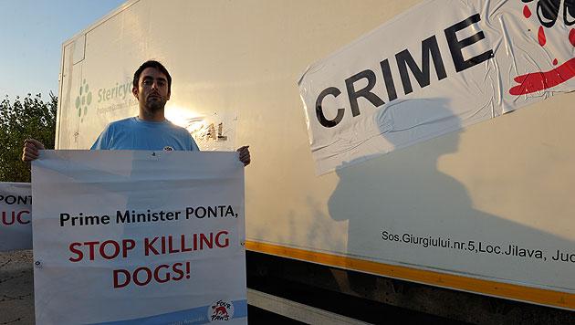 """""""Vier Pfoten"""" stoppten Lkw mit getöteten Hunden (Bild: Vier Pfoten/Matthias Schickhofer)"""