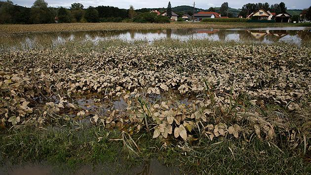 Zahlreiche Äcker standen unter Wasser. (Bild: APA/ERWIN SCHERIAU)