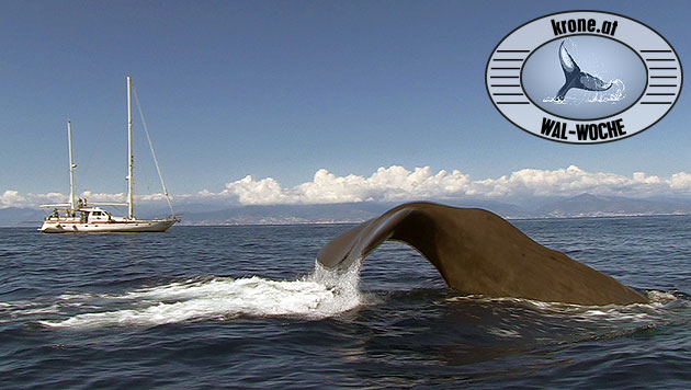 Eine Woche auf dem Tethys-Forschungsschiff geht zu Ende. (Bild: Tethys/V. Fadda, krone.at-Grafik)