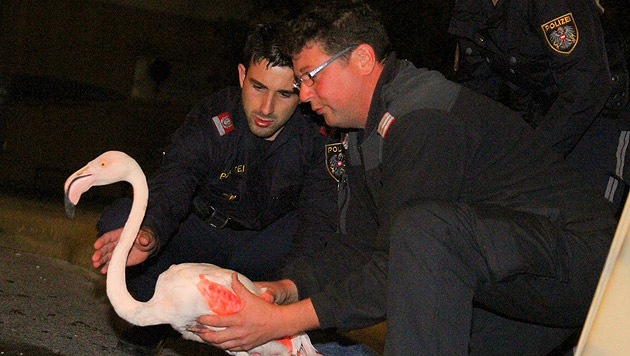 Die Berufsfeuerwehr übernahm das Tier von der Polizei. (Bild: Markus Tschepp)