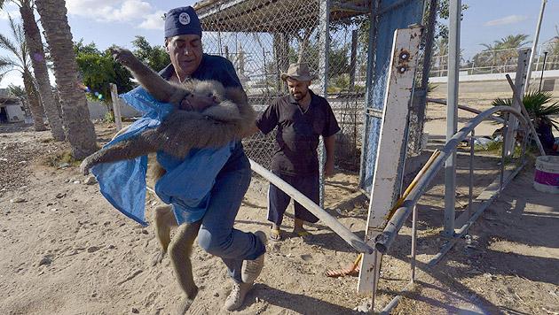 Tierschützer versorgen Tiere aus bombardiertem Zoo (Bild: Vier Pfoten)