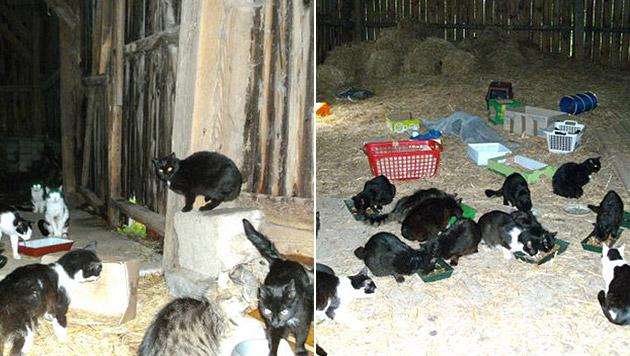 Das Gebäude dürfen die Renners mittlerweile nicht mehr betreten - sie füttern die Katzen draußen. (Bild: Privat)