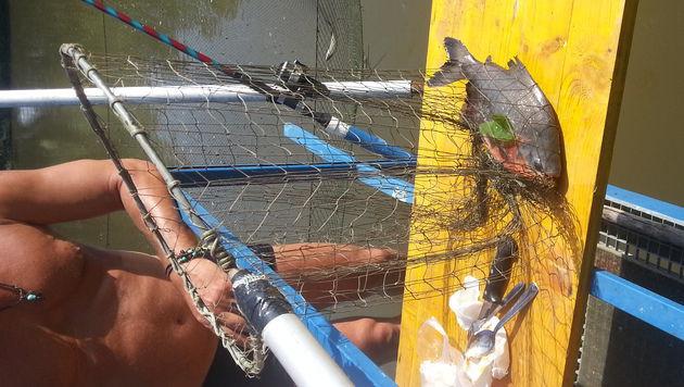 Die Fischer staunten nicht schlecht über den exotischen Fang. (Bild: Werner Rebensteiner)
