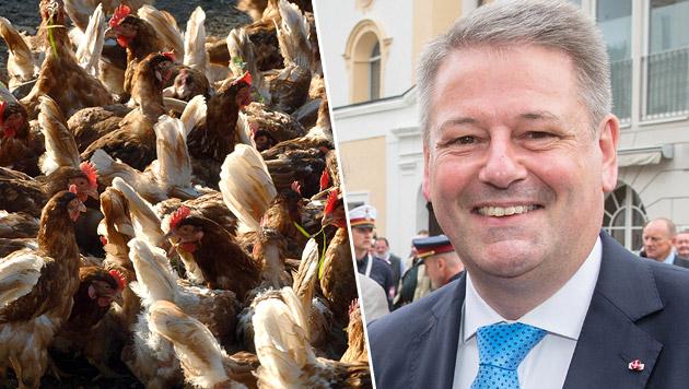Rupprechter kämpft um Lebensmittel-Standards (Bild: dpa/Holger Hollemann, APA/NEUMAYR/MMV,)