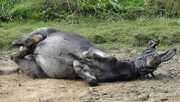 Wer sich wirklich fragen muss, ob ein Tier sich freuen kann - dieses Bild spricht Bände. (Bild: Purzel & Vicky)