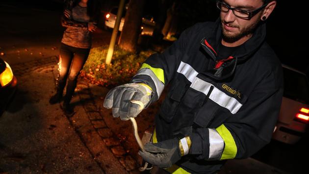 Die Feuerwehr fing das Reptil ein und brachte es zurück in die Natur. (Bild: laumat.at/Matthias Lauber)