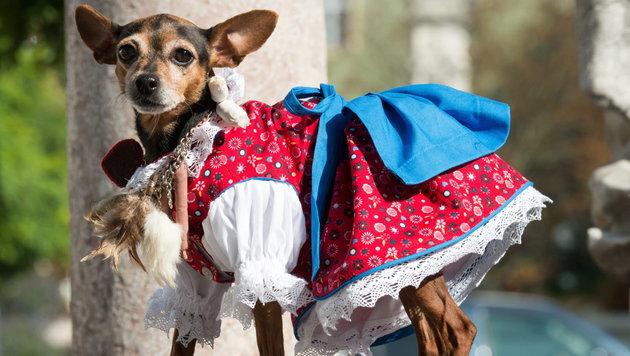 Tierische Tracht für Hund und Herrl zur Wiesn (Bild: APA/EPA/Armin Weigel)