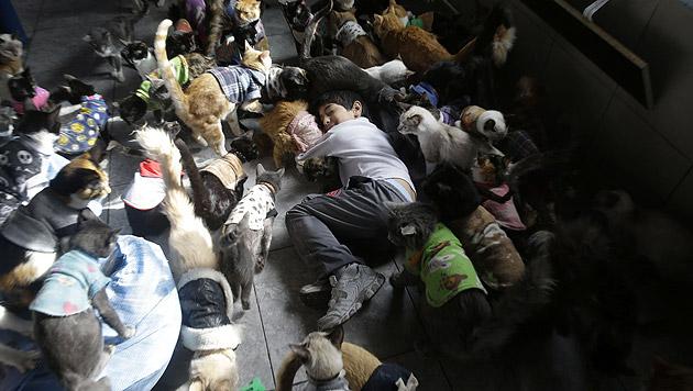 Peruanerin versorgt zu Hause 175 todkranke Katzen (Bild: AP)
