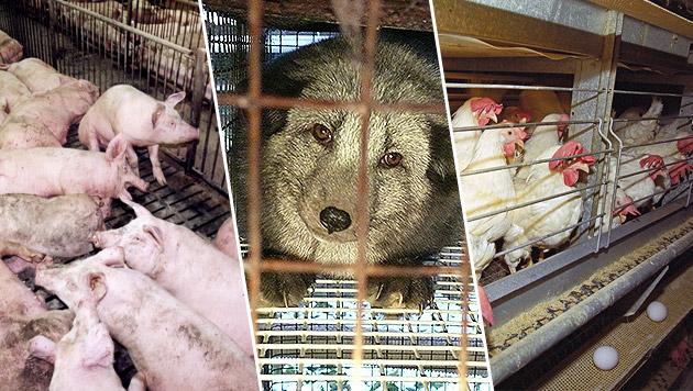 Am 4. Oktober wurde der Welttierschutztag gefeiert (Bild: Fred Dott, Vier Pfoten)