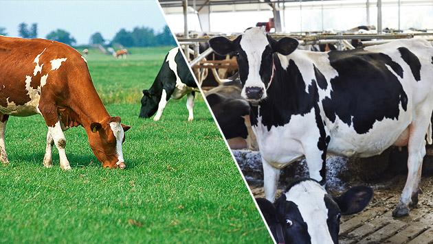 Fleisch aus artgemäßer Tierhaltung immer beliebter (Bild: thinkstockphotos.de)
