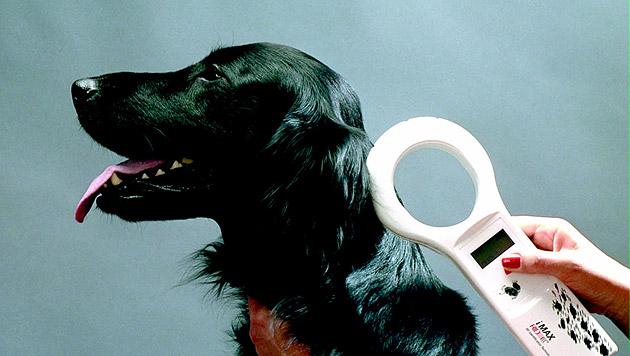 Misere um die Mikrochip-Pflicht für unsere Hunde (Bild: kba)