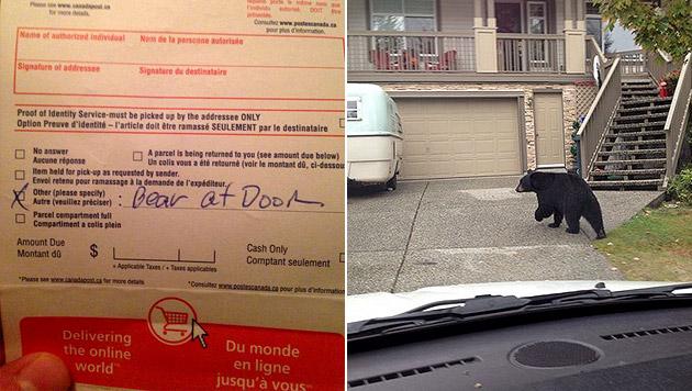 Paket wegen eines Bären vor der Tür unzustellbar (Bild: twitter.com)