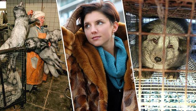"Tierschützer zur Ballsaison: ""Bitte ohne Pelz!"" (Bild: Vier Pfoten, Gabriele Moser, ROMAN PODERNY CORBIS SYGMA)"