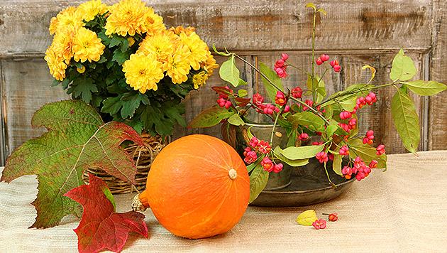 Herbstliche farbenpracht f r zu hause deko trends 2014 for Deko zu hause