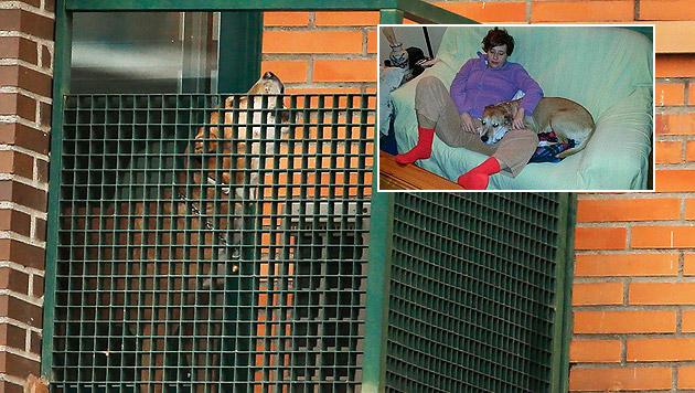 Spanien: Hund von Ebola-Patientin eingeschläfert (Bild: AP)