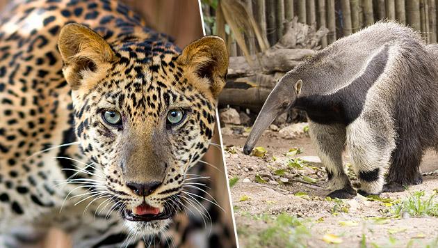 Zoo in Rio wegen unhaltbarer Zustände geschlossen (Bild: thinkstockphotos.de)
