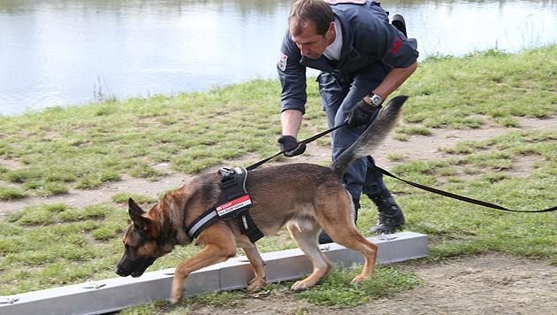 Die Zollhunde werden natürlich nicht süchtig gemacht, das Training basiert auf ihrem Spieltrieb. (Bild: Jürgen Radspieler)