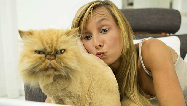 Bitte lächeln: Katzen-Selfies liegen im Trend (Bild: thinkstockphotos.de)