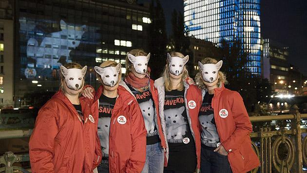 """Fuchs """"Kimi"""" gibt gequälten Pelztieren ein Gesicht (Bild: Vier Pfoten/Tibor Rauch)"""