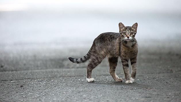 Katze aus Motorraum im Bezirk Mödling befreit (Bild: thinkstockphotos.de (Symbolbild))
