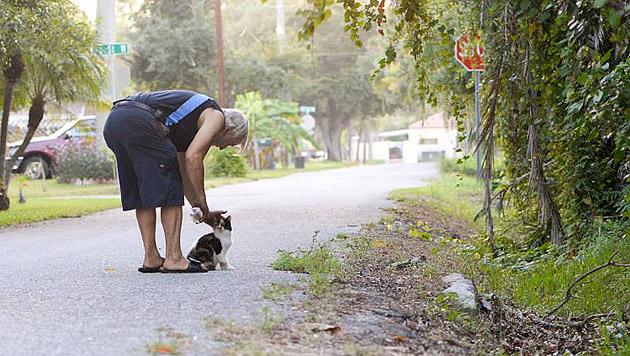 US-Pensionist sammelte 10 Jahre für Streunerkatzen (Bild: Facebook.com/Gulf Shore Animal League)