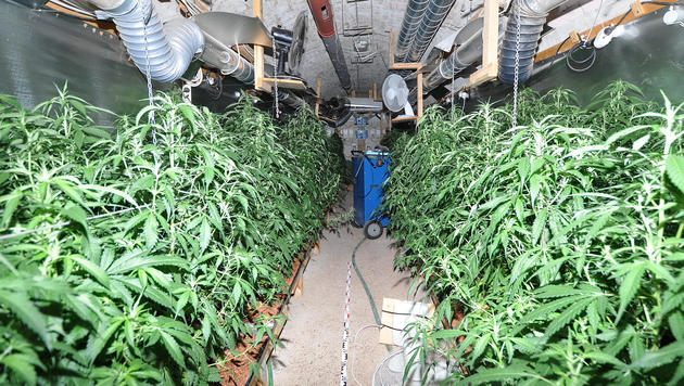Die Hanfplantage wurde in einer Erdhöhle unter dem Fußboden angelegt. (Bild: APA/Bezirkspolizeikommando Oberwart)