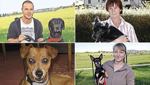 Giftköder ausgelegt: Sieben Hunde in Salzburg tot (Bild: Markus Tschepp, kba)