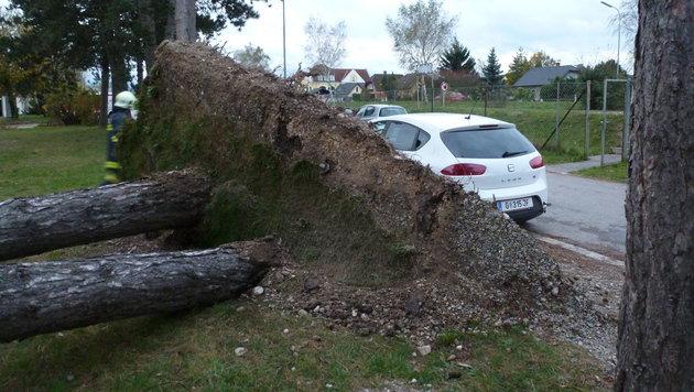 Umgestürzte Bäume in St. Georgen (NÖ) (Bild: APA/FF ST. GEORGEN)
