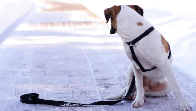 Trauriges Schicksal für Haustiere in Tierheimen (Bild: thinkstockphotos.de (Symbolbild))