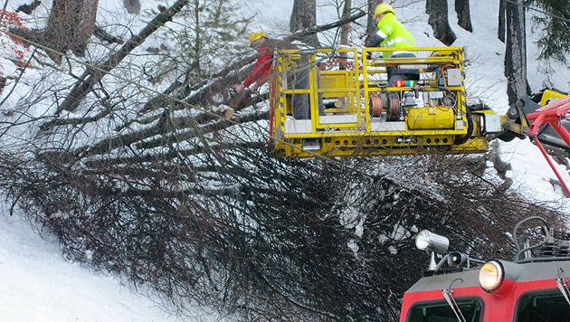 Umgestürzte Bäume beschädigten die Oberleitung der Westbahnstrecke in Vorarlberg. (Bild: ÖBB)