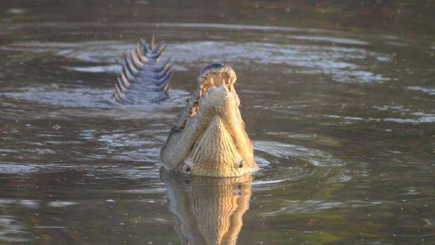 Imposante Natur: Abenteuerreise durch Australien (Bild: flickr.com/Obliot)