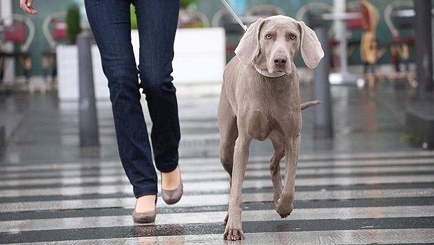 Nützliche Tipps für Städtereisen mit Hund (Bild: Royal Canin/F. Duhayer)