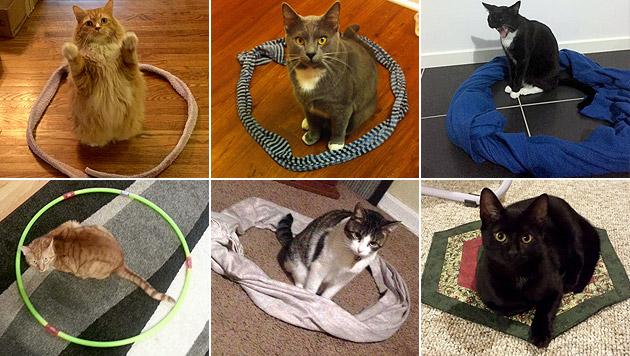 Reddit-User tricksen ihre Katzen mit Kreisen aus (Bild: Reddit.com - User)