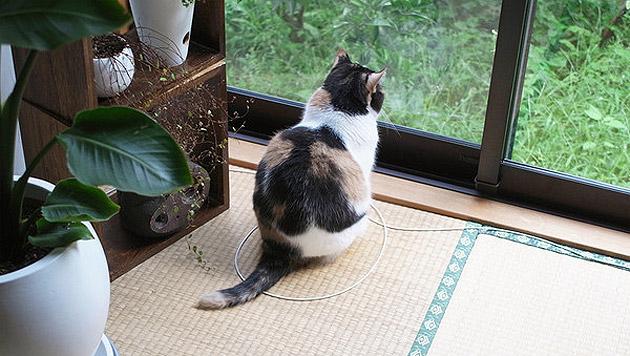 Reddit-User tricksen ihre Katzen mit Kreisen aus (Bild: SneakyChino/Reddit.com)