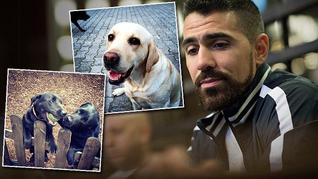Bushido hat seine drei Hunde ins Tierheim gegeben (Bild: APA/EPA/BERND VON JUTRCZENKA, instagram.com/bush1do)