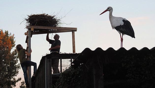 Angeschossener Storch ist endlich wieder flugfähig (Bild: Vier Pfoten/Stefan Knöpfer)