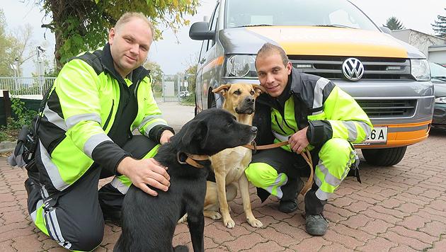 Zwei Hunde verirrten sich auf Wiener Autobahn (Bild: ASFINAG)