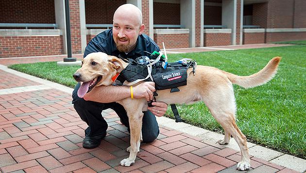 """Dieses Geschirr soll Menschen erlauben, mit ihrem Hund zu """"sprechen"""". (Bild: NC State University, Becky Kirkland)"""