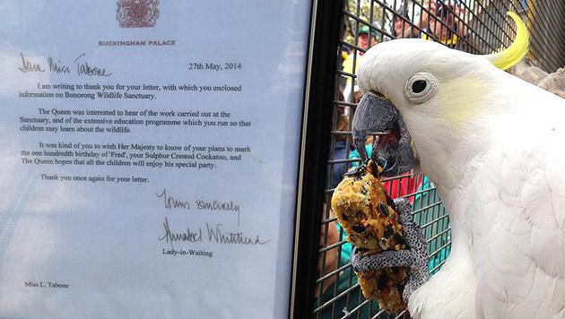 "Australien: Kakadu ""Fred"" feierte 100. Geburtstag (Bild: facebook.com/Bonorong Wildlife Sanctuary)"