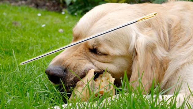 Tierhasser legte in OÖ Köder mit Nadeln aus (Bild: thinkstockphotos.de (Symbolbild))