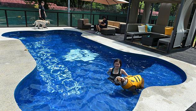 Unter anderem gibt's einen knochenförmigen Swimmingpool für die Vierbeiner. (Bild: AFP)