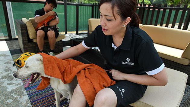 Luxushotel für Vierbeiner in Singapur eröffnet (Bild: AFP)
