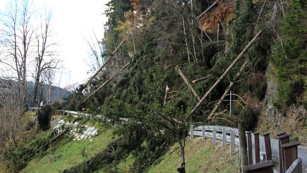 Umgeknickte Bäume blockierten in Salzburg einige Straßen. (Bild: APA/GEMEINDE STUHLFELDEN/EGGER GUNDI)