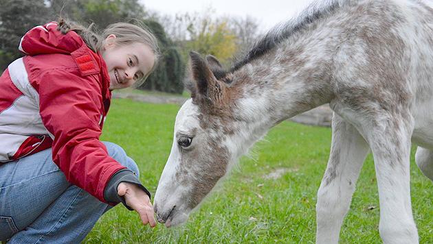 """Fohlen entzückt Kinder und Team von """"e.motion"""" (Bild: Verein e.motion)"""