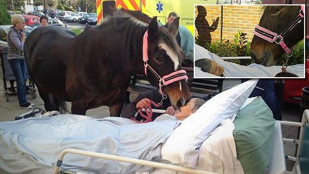Pferd nimmt von Besitzerin für immer Abschied (Bild: twitter.com/andrewkfoster)